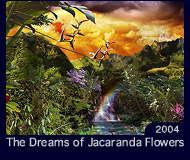 The Dreams of Jacaranda Flowers